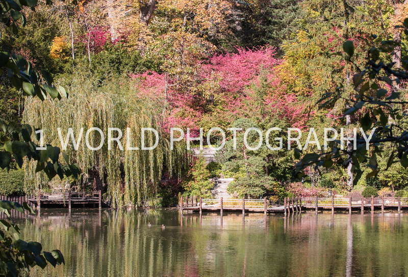 Anderson Japanese Gardens5005.jpg