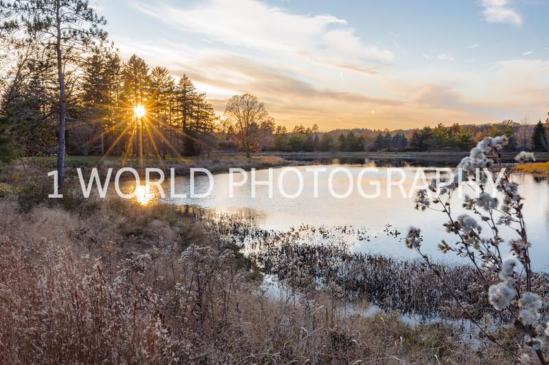 201911052019_11 Morton Arboretum035--5.jpg