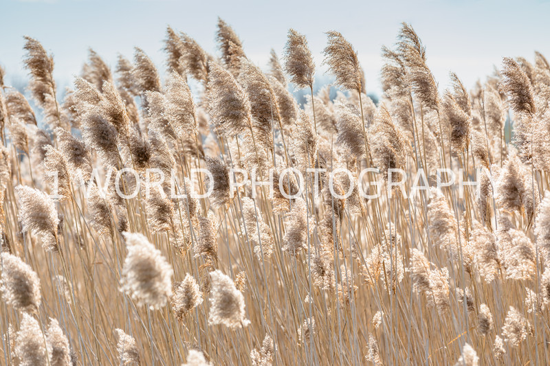 202011202020_11_20 Tall Pampas Grass079--2.jpg