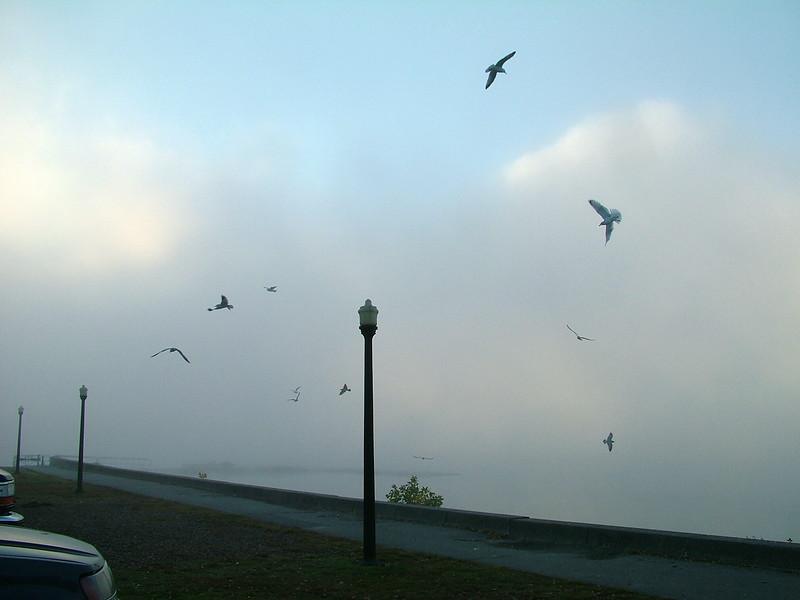 Fog along the Merrimack River