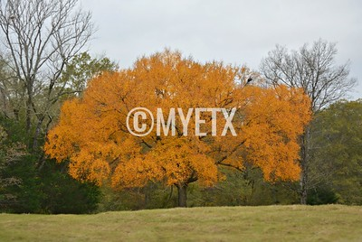 East Texas Orange