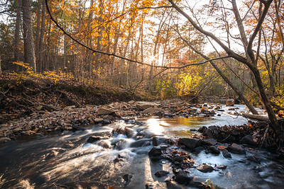 Images of Autumn at Hawn State Park