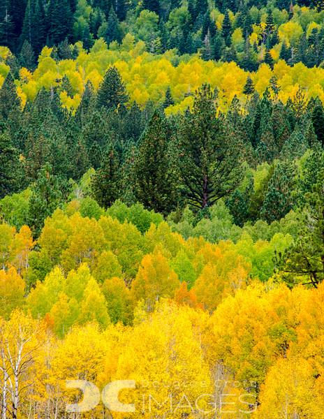 Autumn Parfait