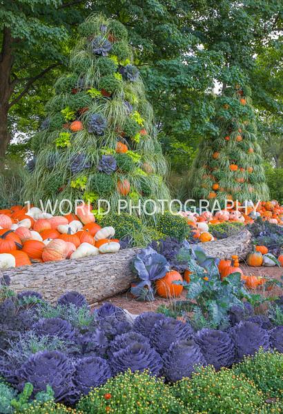 Morton Arboretum Fall_16-2.jpg