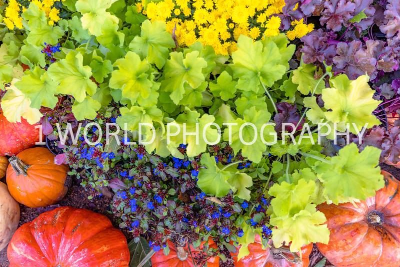 Morton Arboretum Fall 2017-61-13.jpg