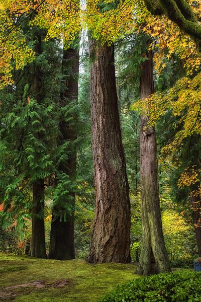 Storybook trees