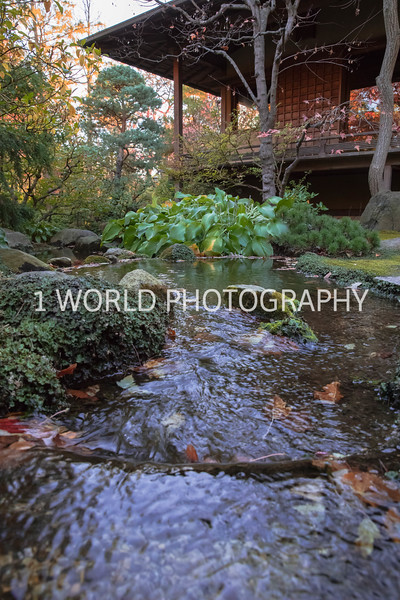 Anderson Japanese Gardens Fall '16-3.jpg