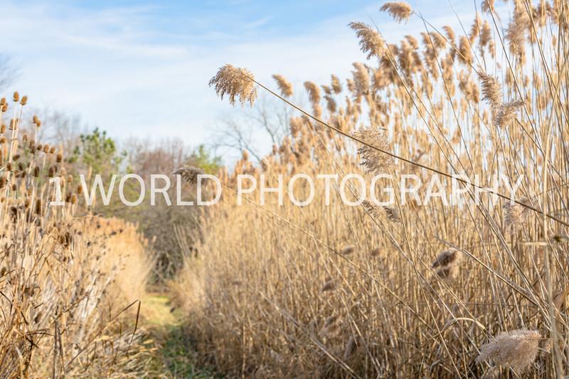 202011202020_11_20 Tall Pampas Grass119--11.jpg