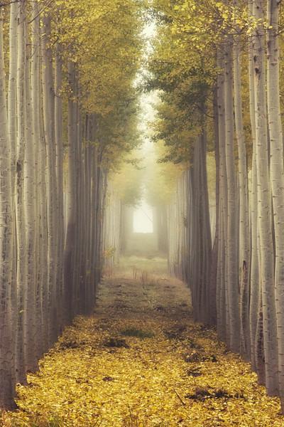 Into the Fog 2