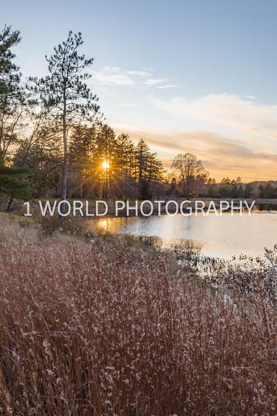 201911052019_11 Morton Arboretum023--3.jpg