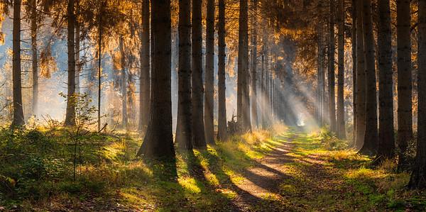 Forest Light PB8806-8807.2020