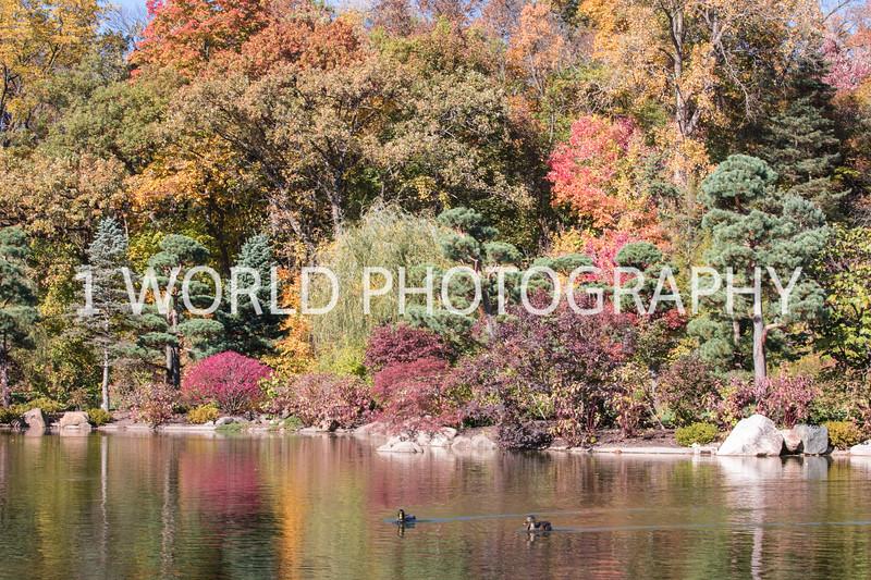 Anderson Japanese Gardens3003.jpg