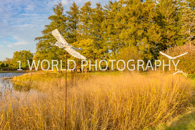 Morton Arboretum Fall 2017-6-2-1.jpg