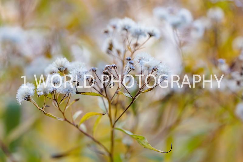 201911052019_11 Morton Arboretum160--6.jpg