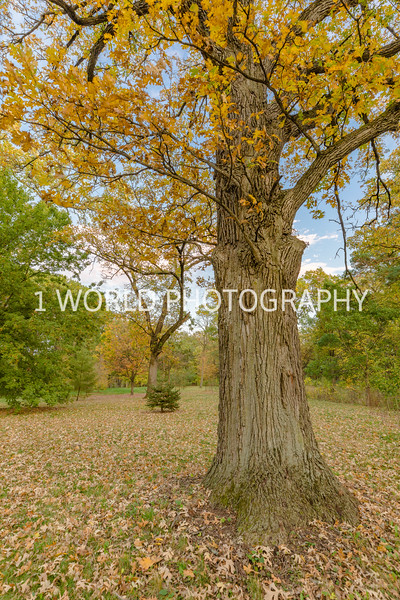 Morton Arboretum Fall 2017-155-2-4.jpg