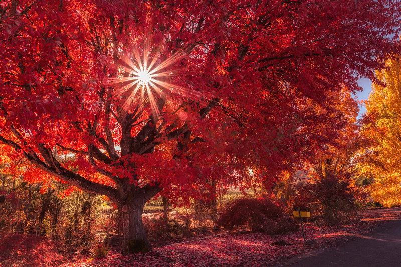 Dazzling Autumn Red
