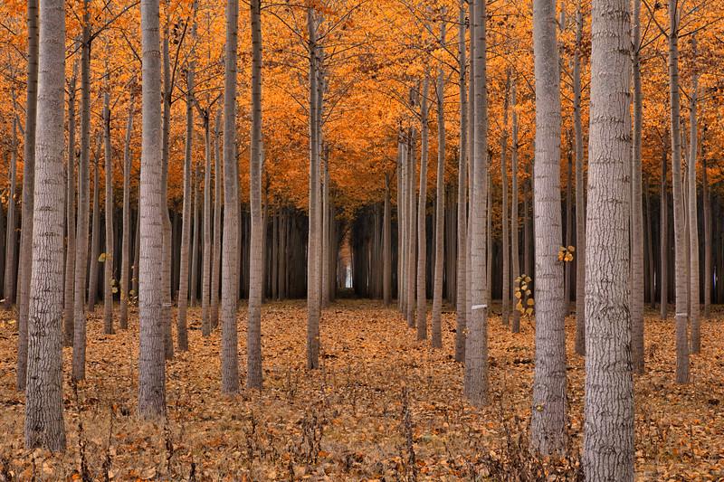 Autumn's Passage