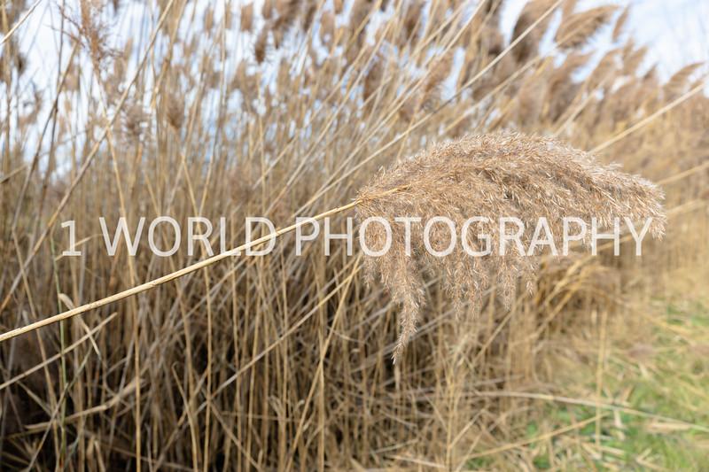 202011202020_11_20 Tall Pampas Grass042--7.jpg
