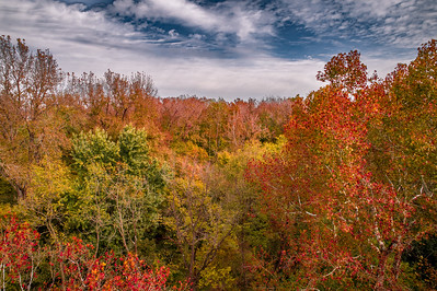 Colorful Treetops