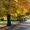 Glenwood Gardens 1