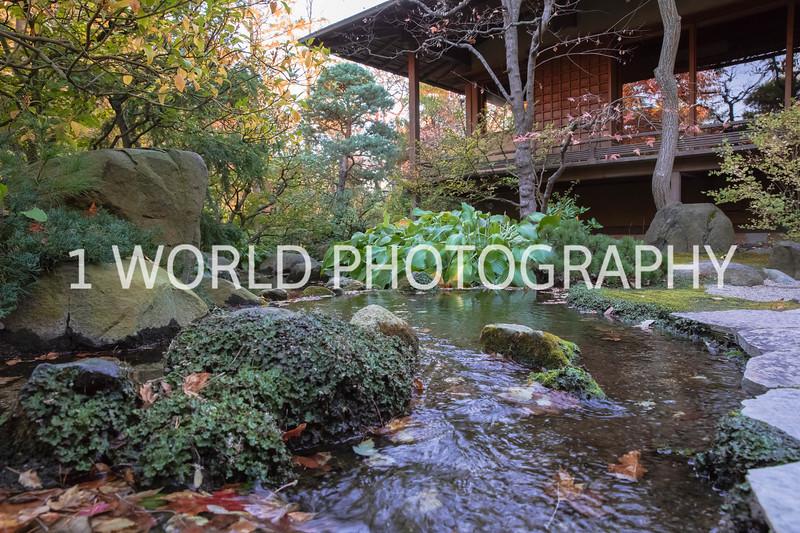 Anderson Japanese Gardens Fall '16-2.jpg