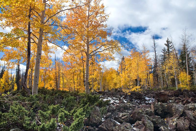 Lava Field, Autumn