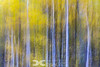 Aspen  - Abstract