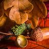 Acorn and Autumn Colours