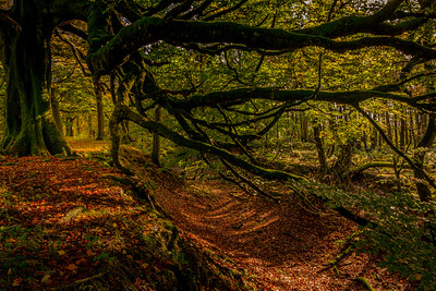 White Hill Wood_2