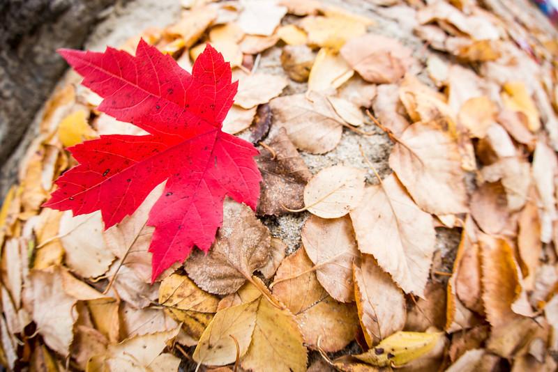 Canadian October