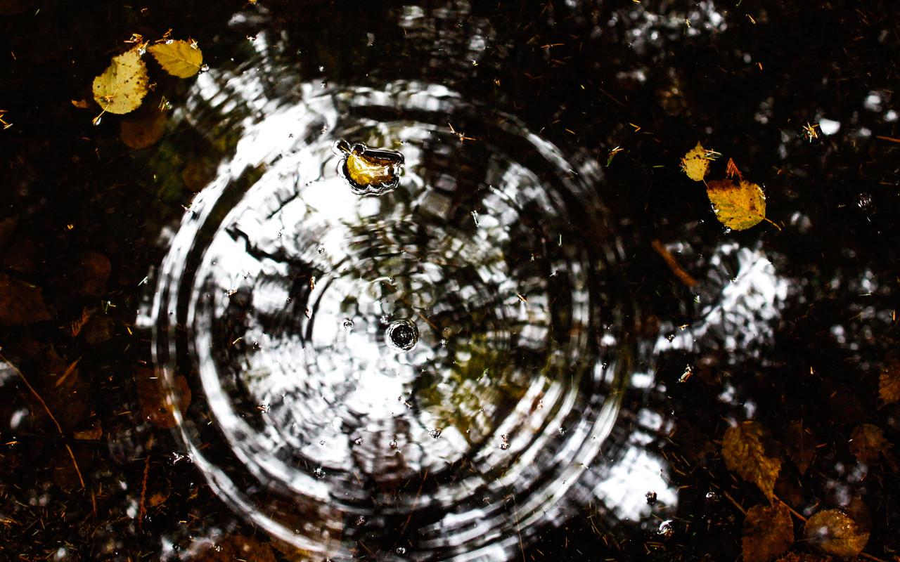 Autumn Splash