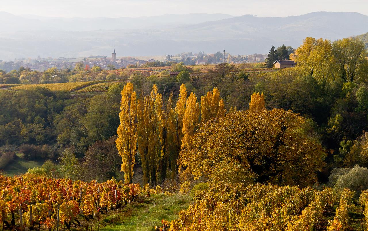 automne_11-10-29_10940