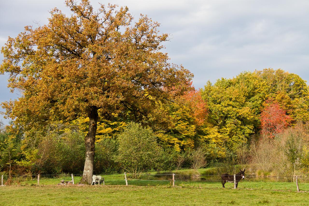 automne_11-11-01_11112