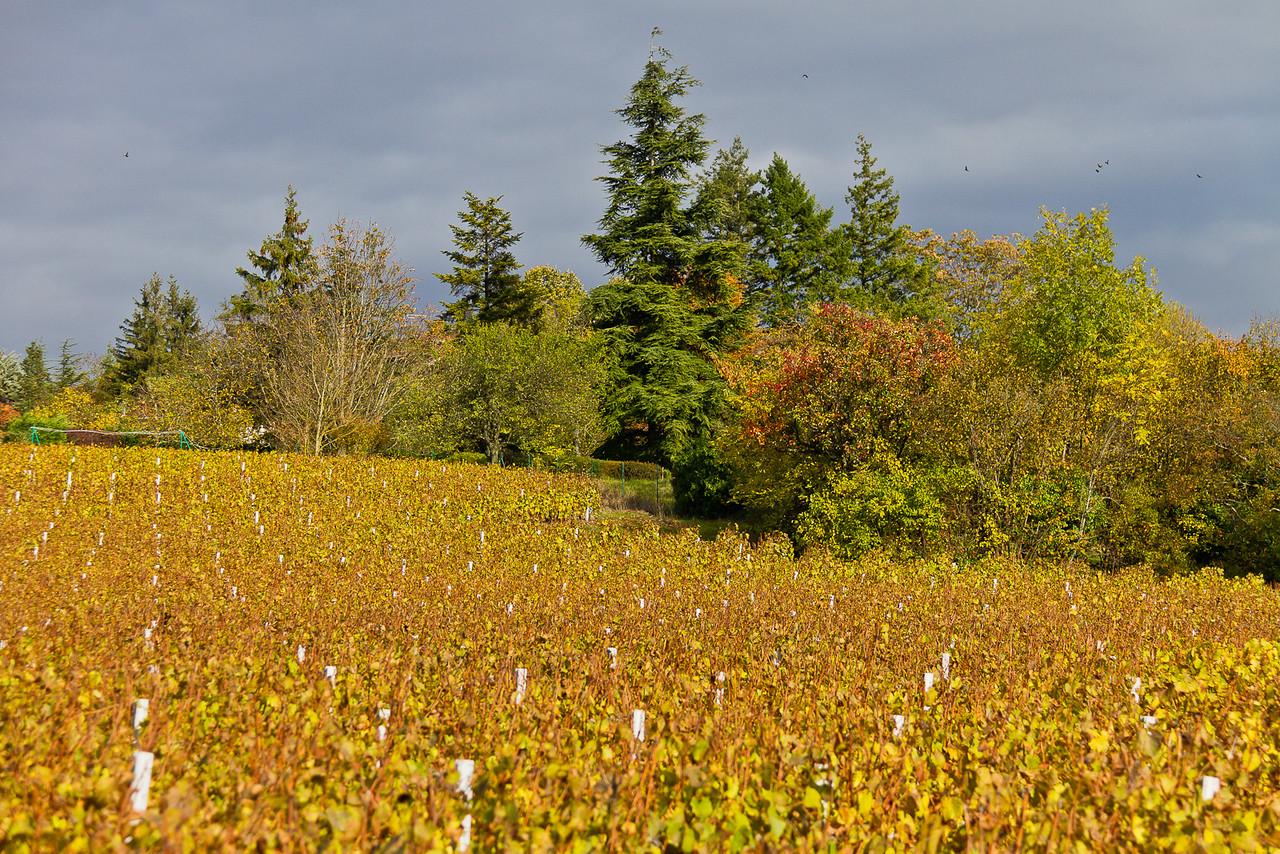 automne_11-10-29_10903