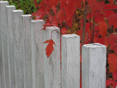 2008-Fall-Color