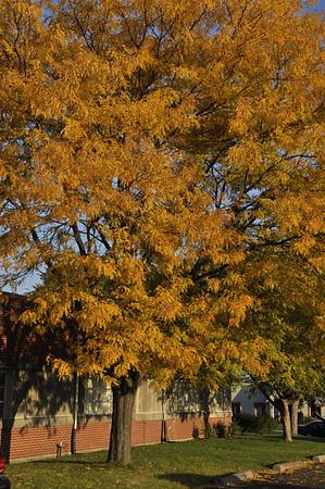 2011-Autumn-CarlHensen-FP