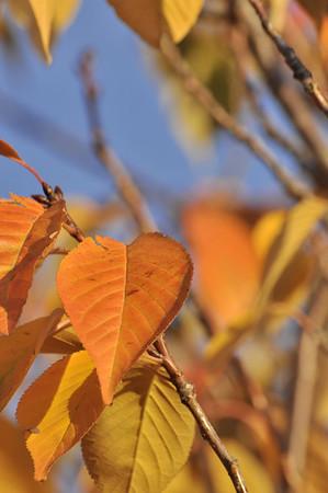 2011-Autumn-Leaves-Sunrises