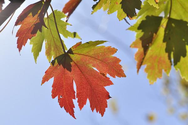 2012-Autumn-East-Branch