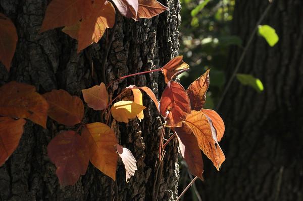 2012-Autumn-Songbird-Slough-Waynes-Pratt