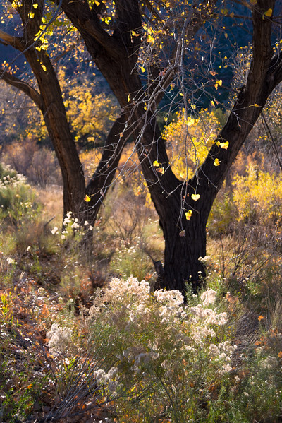 Autumn in the Jemez #5