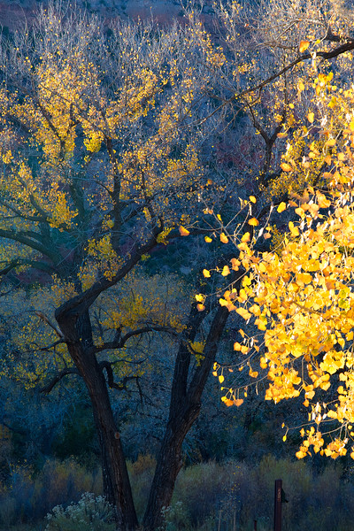 Autumn in the Jemez #3