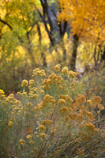 Autumn in the Jemez #1