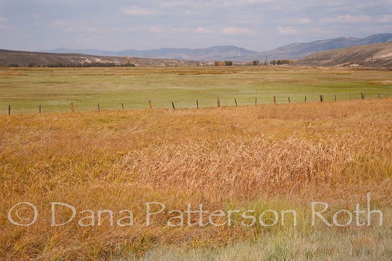 Colorado Fields #1