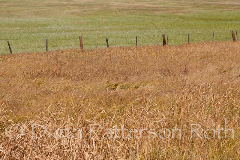 Colorado Fields #2