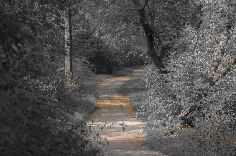 The trail through the woods...