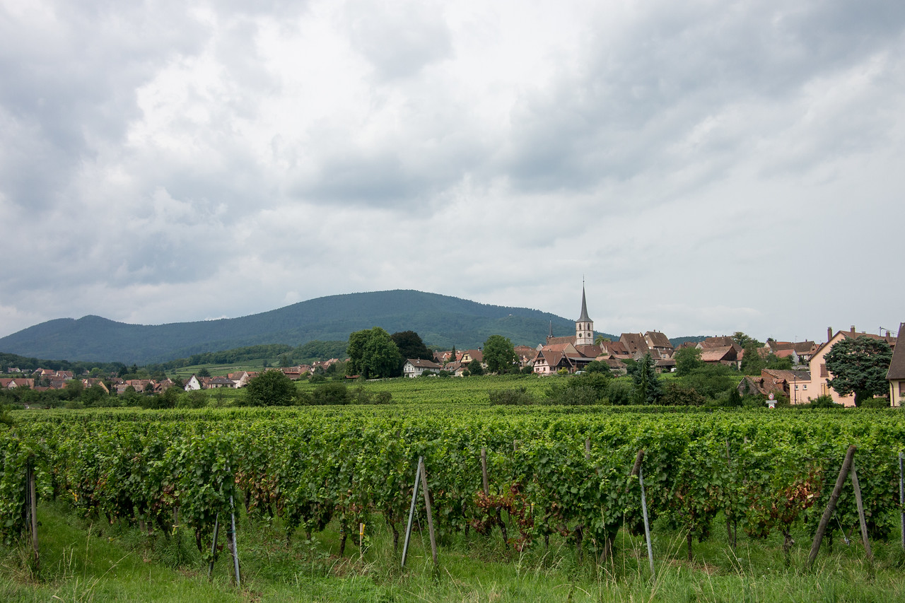 Le vignoble à Mittelbergheim