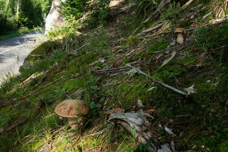 Dans la forêt, un peu avant Grendelbruch