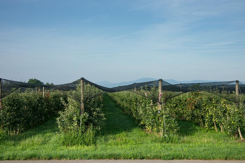 Entre Innenheim et Griesheim
