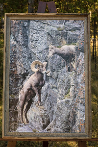 Bighorn Romance-24x36 Canvas-2-inch Barnwood Frame-$395