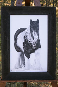 Gypsy Cob-Black and White-16x24 Canvas-4-inch Black Stained Barnwood Frame-$195